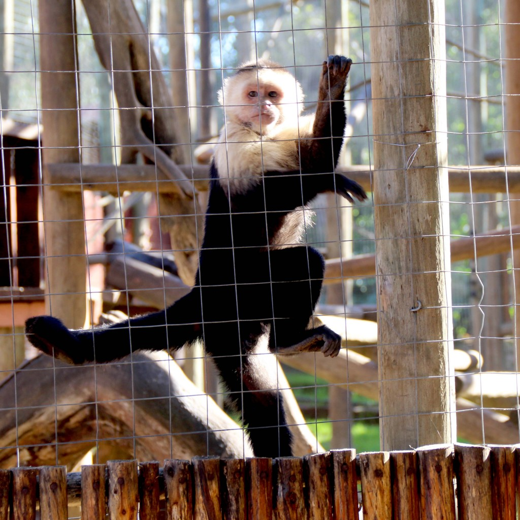 Monkey Town: Monkeying around with the kids